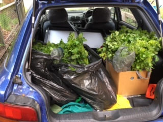 Veggies collected at the Victorian Teachers Games aMAZEing