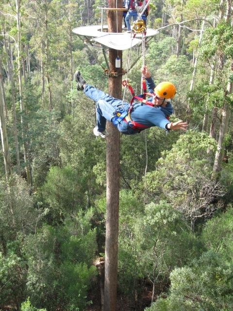 Hollybank Treetops Adventure 4