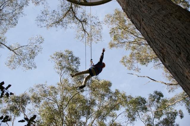 Hollybank Treetops Adventure 3
