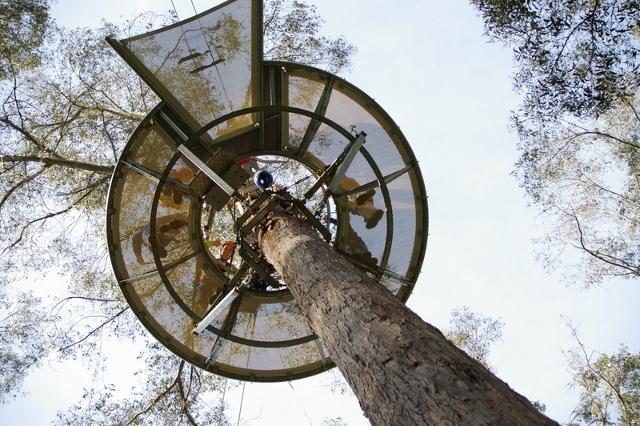 Hollybank Treetops Adventure 2