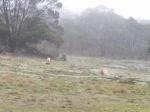 Mt Beckworth Fog