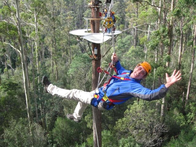 Hollybank Treetops Adventure 5