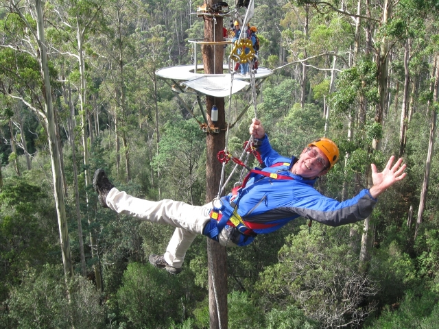 Hollybank Treetops Adventure 5