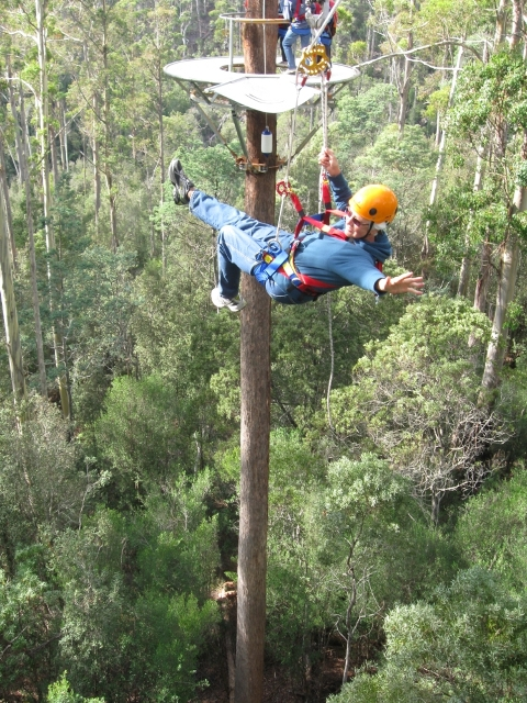 Hollybank Treetops Adventure 4
