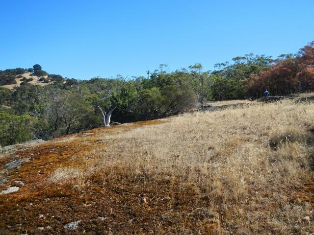 Scenery at Mt Beckworth SS2
